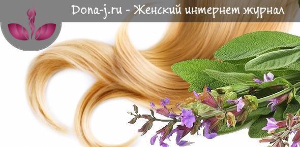 Отвар шалфея для укрепления волос